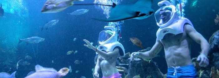 sea-walk-at-cancun-sea-trek.jpg