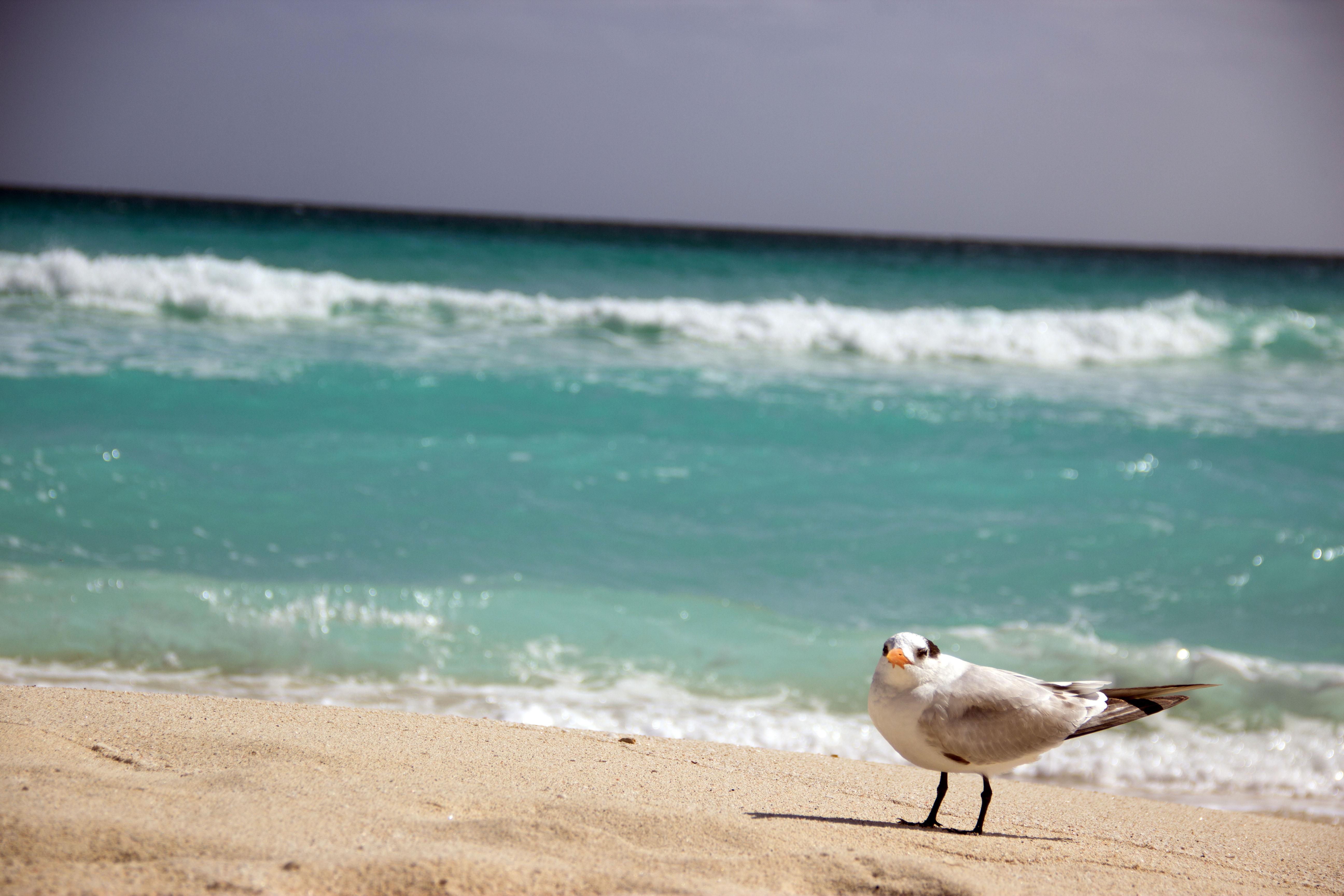 Que hacer en Cancún visitar Playa Delfines Gaviota