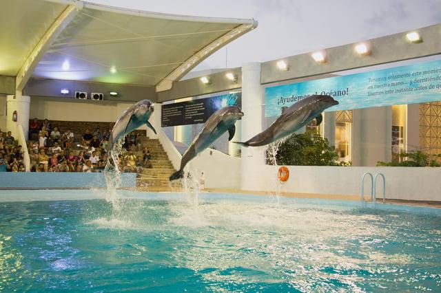 Nado con delfines.jpg