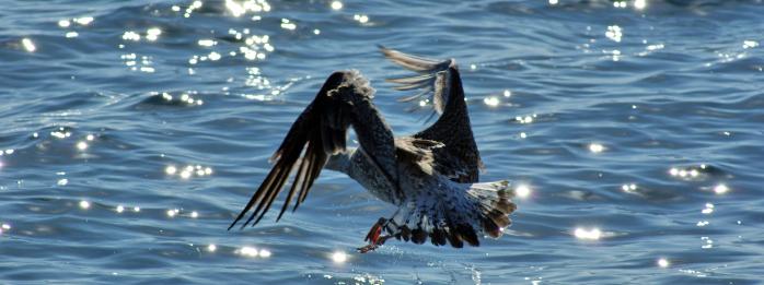 Cuida nuestros océanos cambiando productos tóxicos por productos caseros