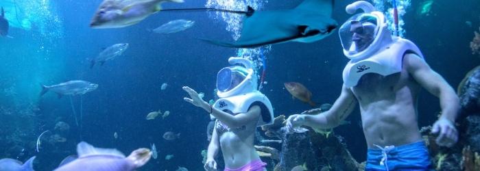 ¿Actividades en Cancún? Una caminata submarina con Delphinus Trek